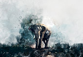 beautiful painting art watercolor elephant