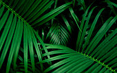 Beautiful palm leaf. top view