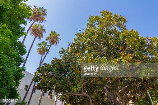 Bela Palma árvores no parque de Málaga, Espanha : Foto de stock