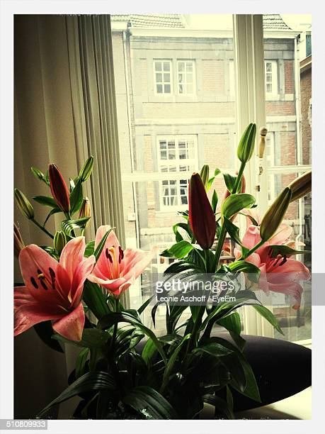 Beautiful pink flowers blooming at home