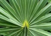 Beautiful plant leaf in botanic green house, sugar palm leaf detail pattern