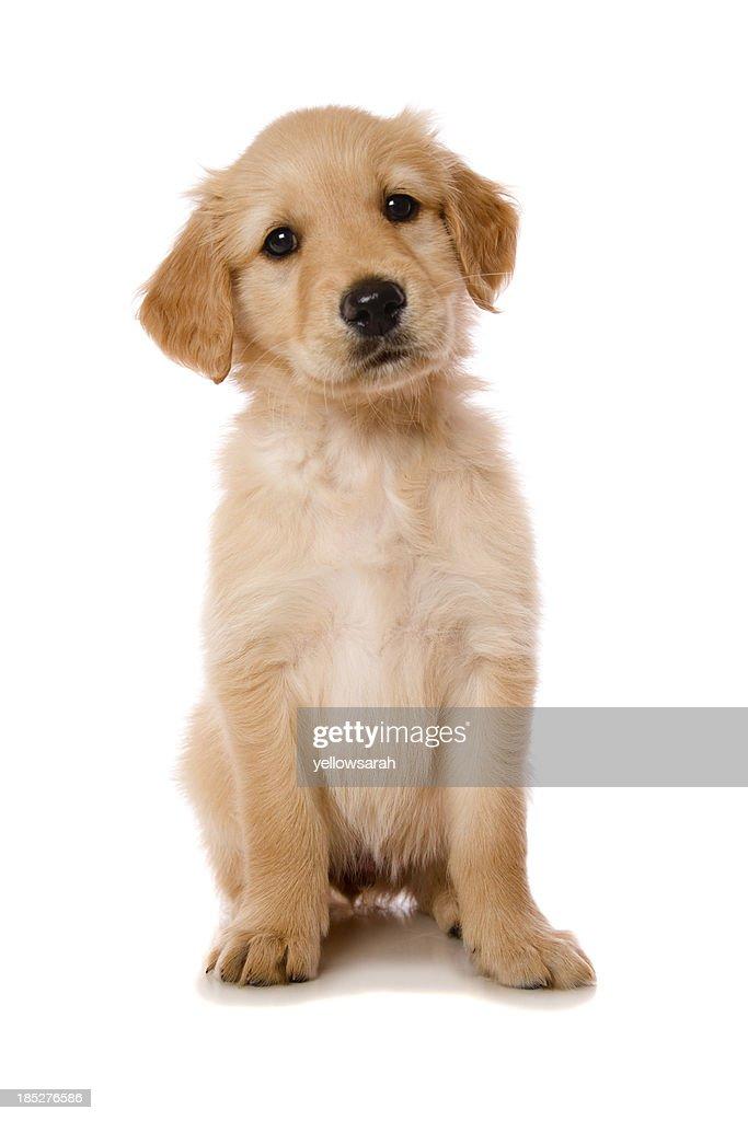 Beautiful Puppy