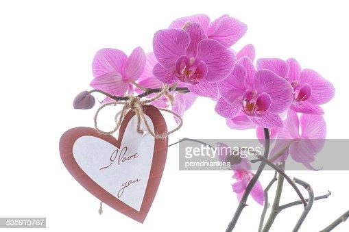 Beautiful purple phalaenopsis flowers : Stock Photo