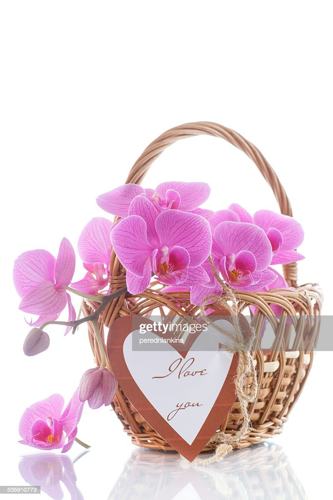 Beautiful purple phalaenopsis flowers : Stock Photo