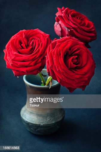 Beautiful red roses : Stock Photo