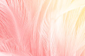 Beautiful red-pink colors tone feather with orange light texture background,trends color