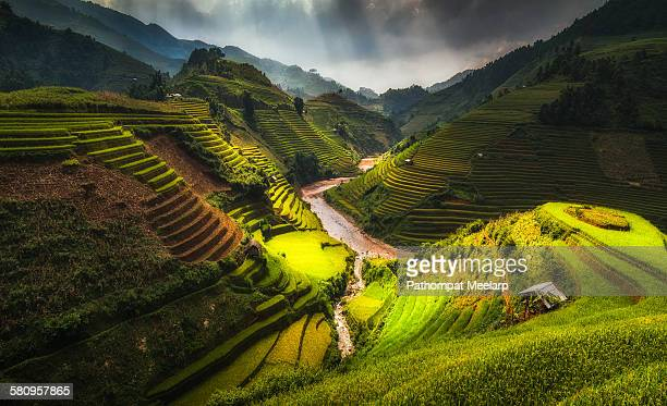 Beautiful rice terrace