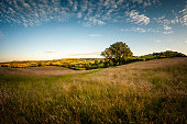 An Oak Tree In A Beautiful Rolling Landscape In The Cotswolds, England