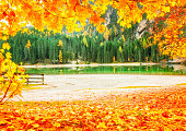 Beautiful romantic autumn scenery at Lake Braies - Lago di Braies in Italy. Frame with yellow leaves at green firs background. Braies - very popular and famous travel destination. Fall season card.