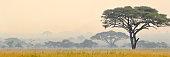 Foggy view of savannah in Serengeti National park in Tanzania