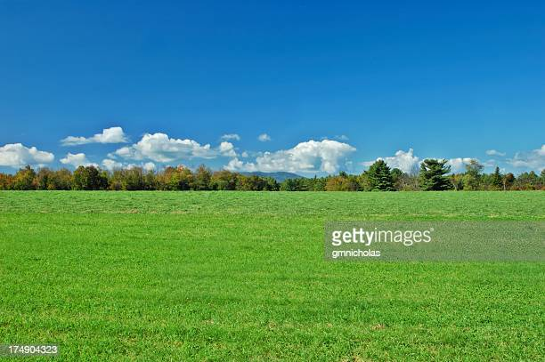 Beautiful scenery of green landscape and trees