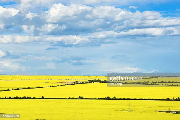 Beautiful scenery of the field