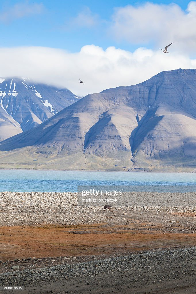 Beautiful scenic view in Svalbard, Norway. : Stock Photo