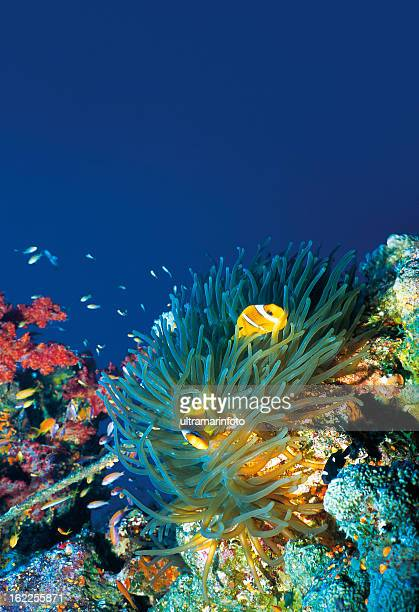 Beautiful Sea Life
