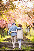 Beautiful senior couple in love on a walk outside in spring nature under blossoming trees. Rear view.