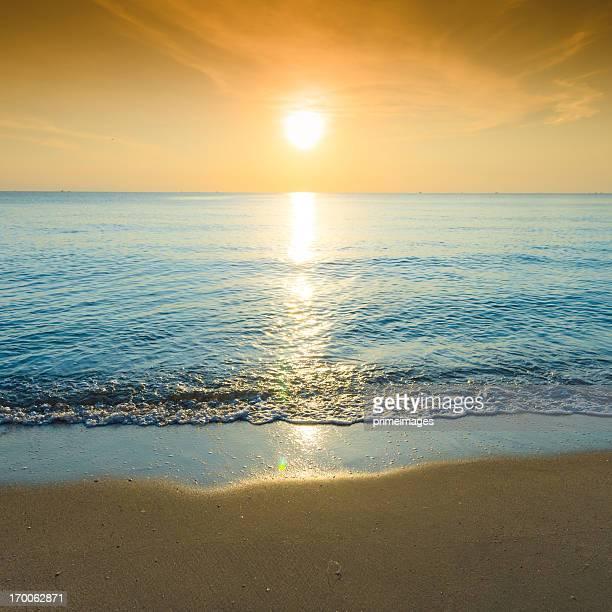 美しいシルエットにトロピカルな海の夕日
