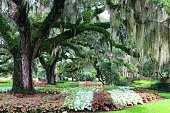 Scenic view with beautiful live oaks with spanish moss and colorful plants under the trees. Landscape in South Carolina, USA.