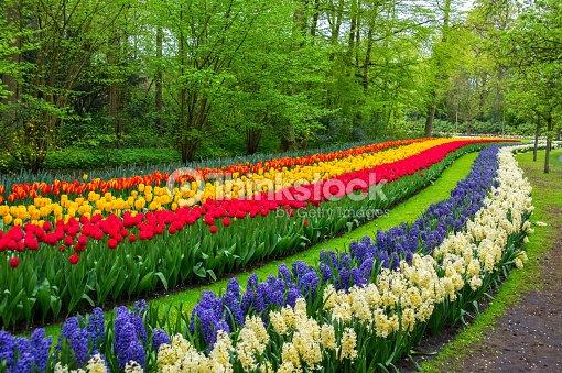 Beautiful Spring Flowers In Keukenhof Park In Netherlands Stock