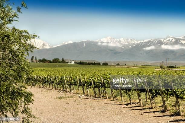 Hermosa primavera en los viñedos