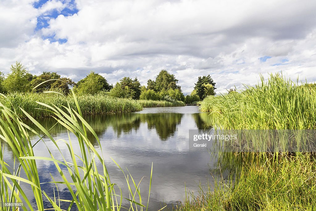 beautiful summer lake : Stock Photo