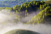 Spring foggy morning with trees on hills in Apuseni Mountains, Romania