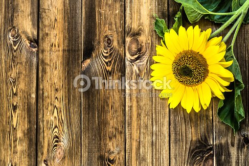 Beautiful Sunflower On Rustic Wood Background Flowers Backgrounds Stock Photo
