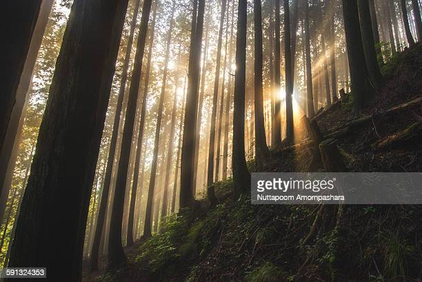 Beautiful sunlight in a forest