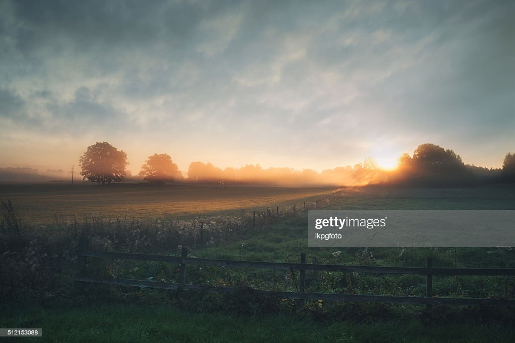 Beautiful sunrise over misty field an early summer morning : Stock Photo