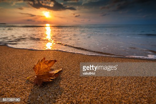 Beautiful sunrise over the sea and leaf. Autumn concept. : Stock Photo