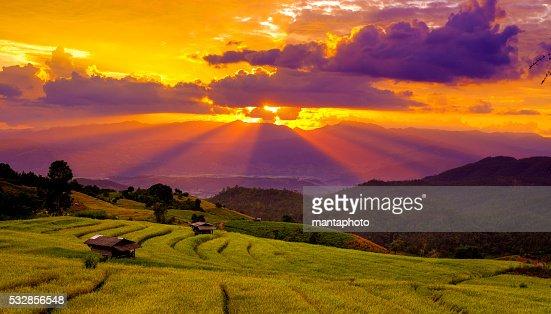 Beautiful sunset atTerraced Paddy Field