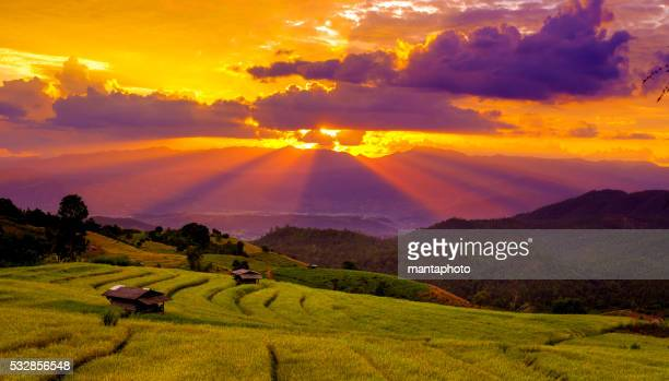 Beautiful sunset atTerraced Paddy Field