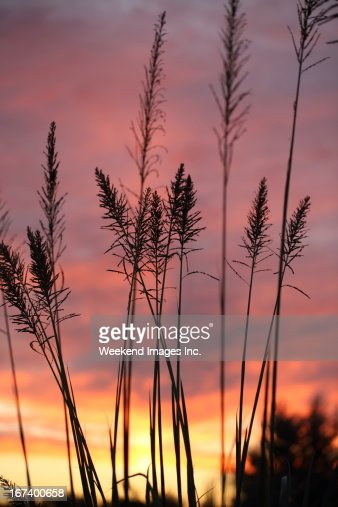 Beautiful sunset light : Stock Photo
