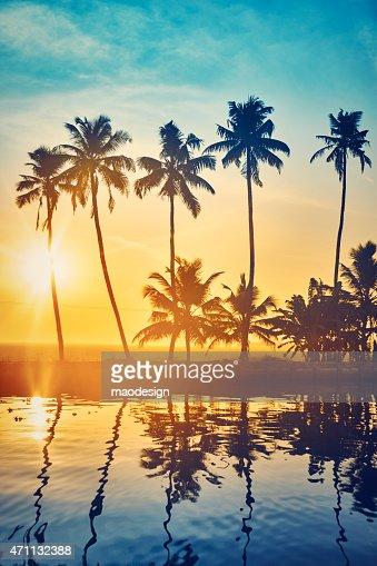 美しい夕暮れのヤシの木で、ケララの入り江