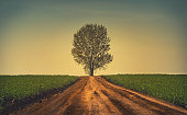 Beautiful tree at the end of the road. Vintage view