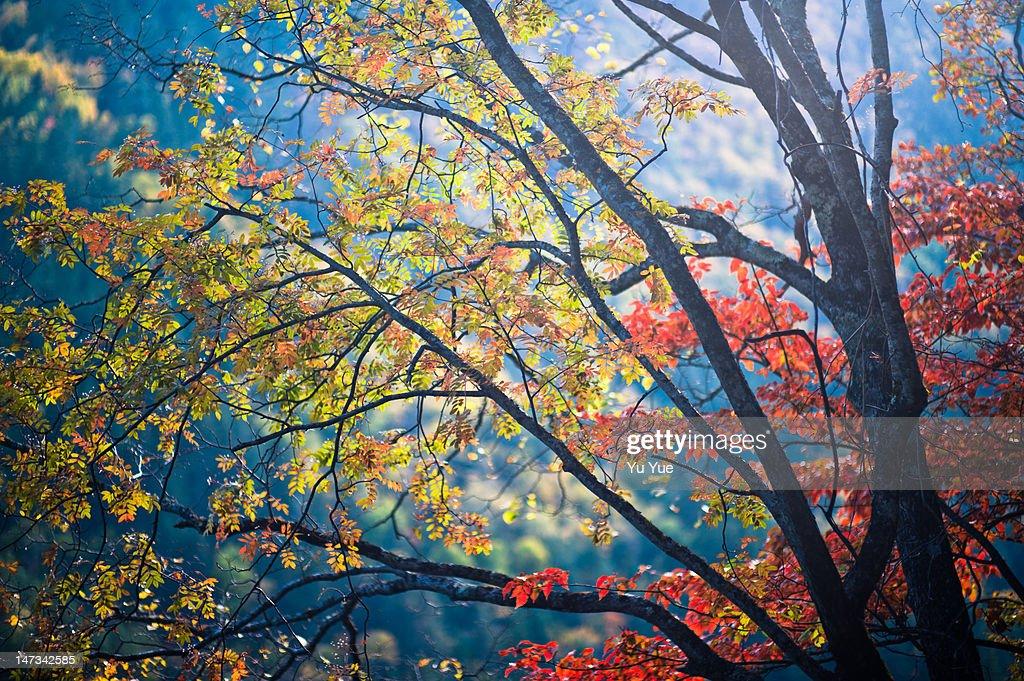 Beautiful tree : Stock Photo