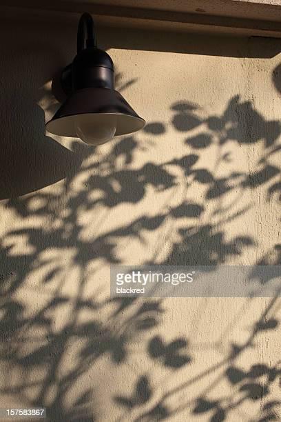 Bela Árvore sombras na parede
