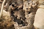 original tree trunk shape