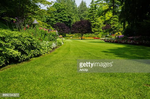 Beautiful trees and green grass  in  garden : Stock Photo