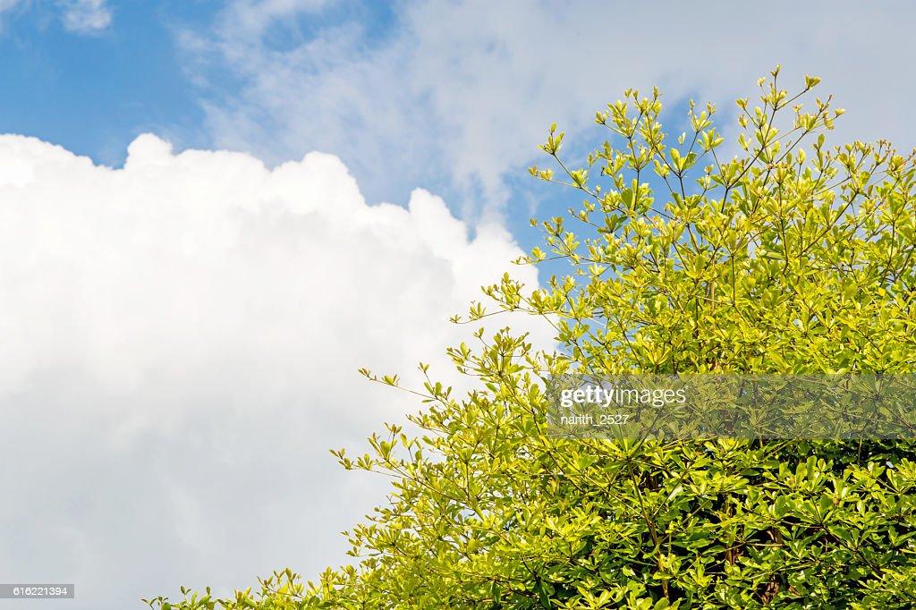 空を背景に美しい木々 : ストックフォト
