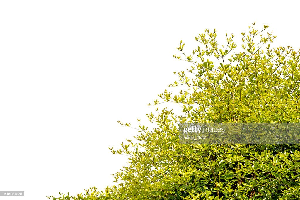 Beautiful trees on white background : Stockfoto