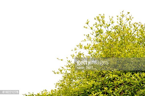 Beautiful trees on white background : Stock Photo