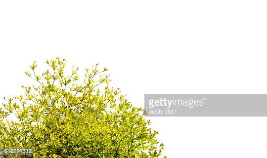 Beautiful trees on white background : Stock Photo