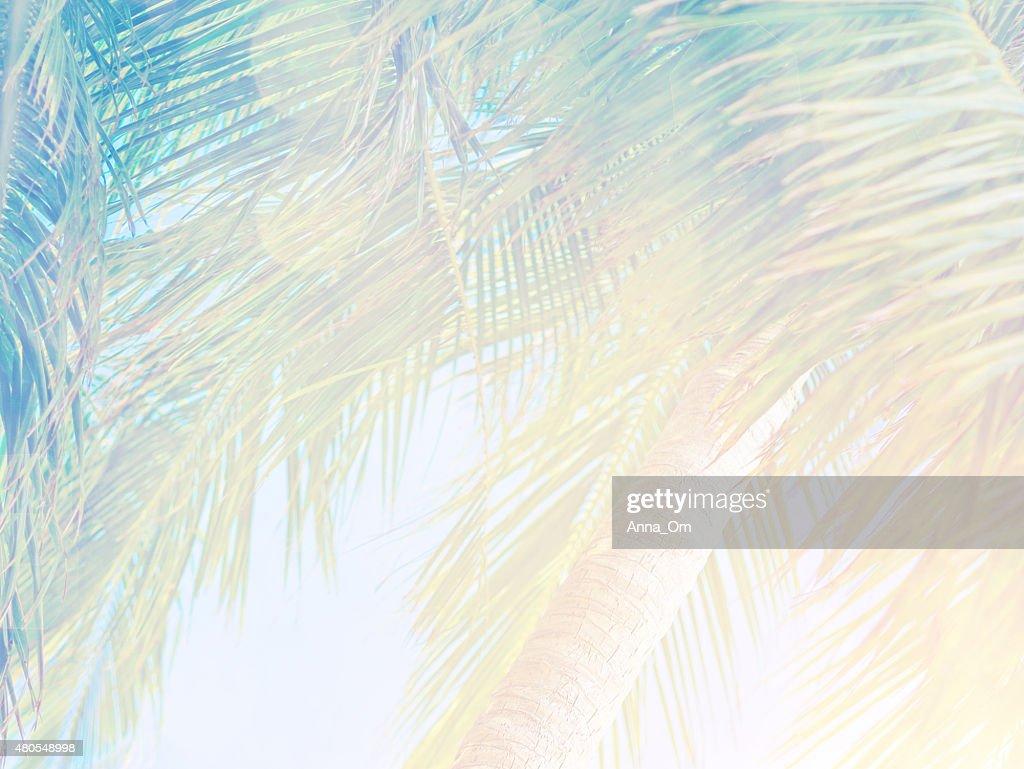 Bonito fundo tropical : Foto de stock