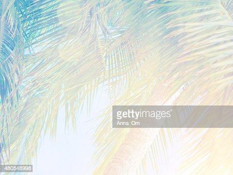 Beautiful tropical background : Stock Photo