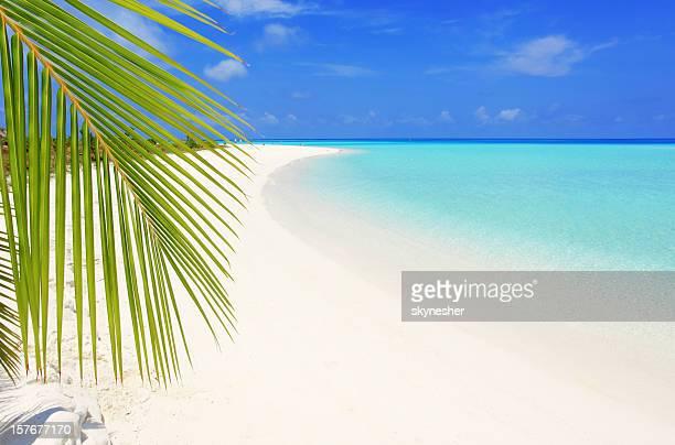Belle plage tropicale.