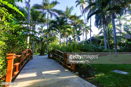 Beautiful tropical resort exterior with palm trees. : Stock Photo