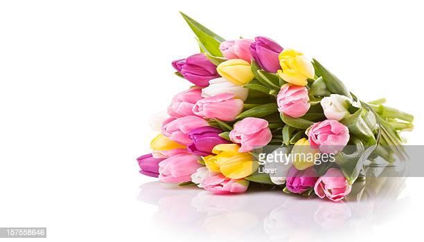 Schöne Tulpen isoliert auf weißem Hintergrund