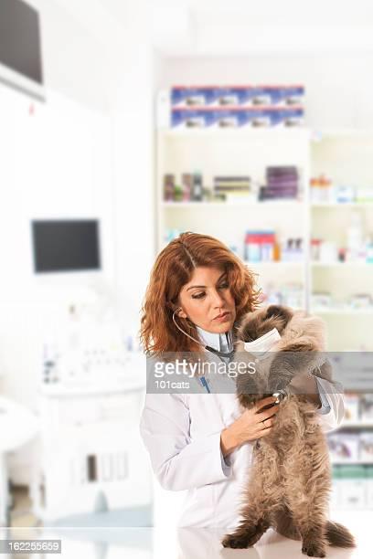 beautiful veterinary