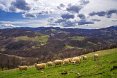 Beautiful vibrant mountain scenery with herd of sheep