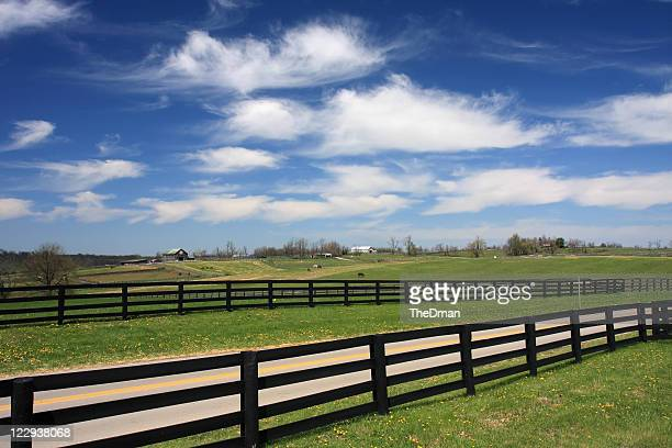 Beautiful view of horse country